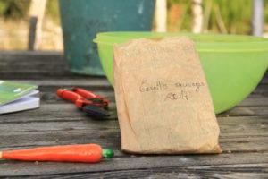 Empaquetage des semences, on prend soin de noter la variété ainsi que l'année de récolte.