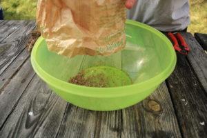 Après battage on transvase les graines et les fragments de plantes pour les trier