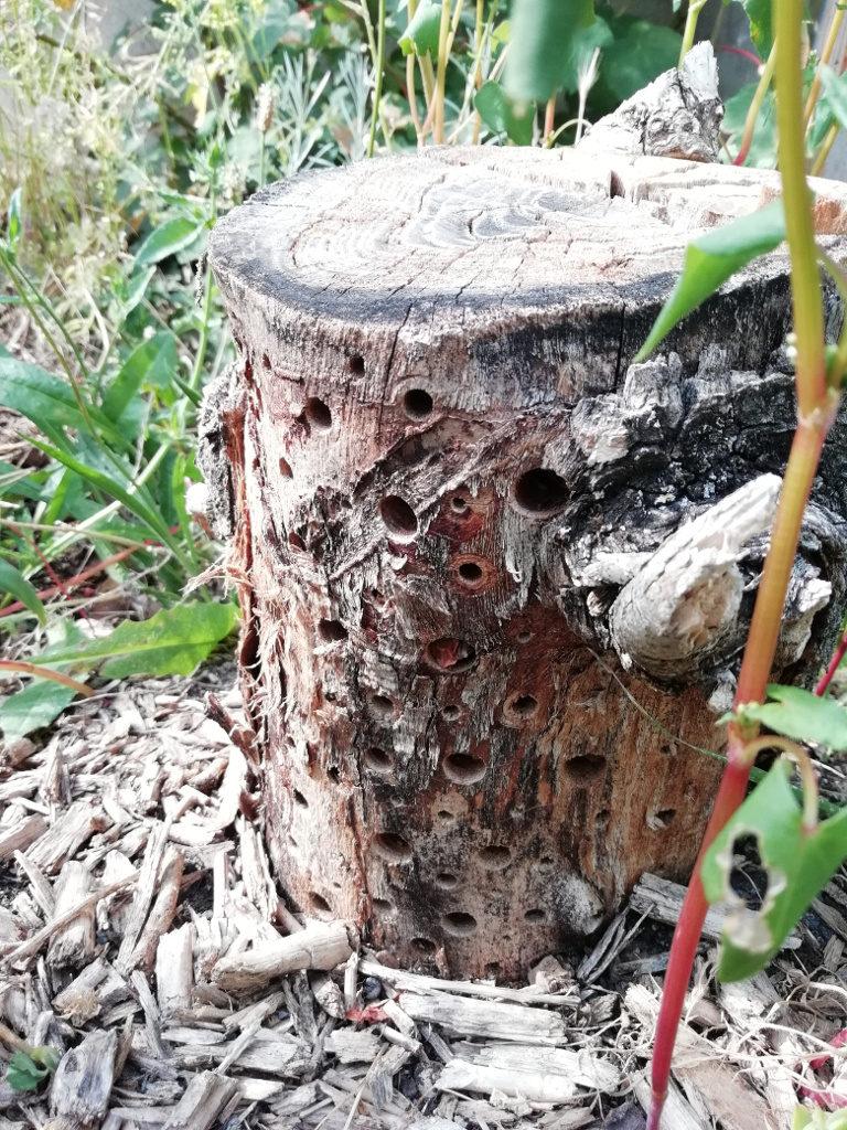 Une bûche percée de trous de tailles diverses pour les insectes.