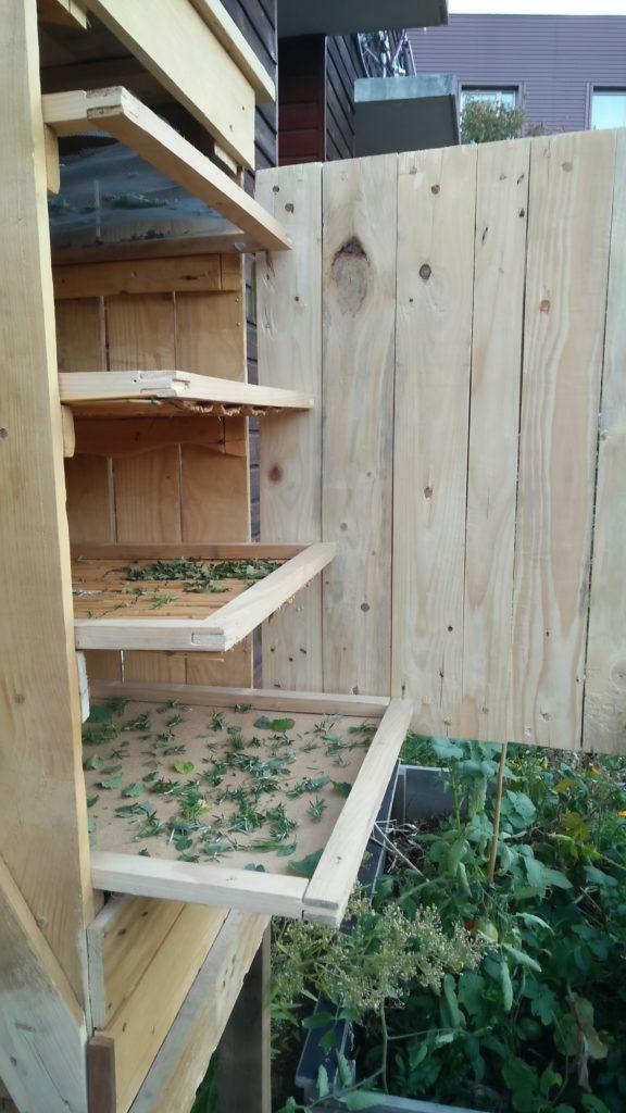 Plan moyen sur le séchoir ouvert. On distingue les quatre claies (ou tiroirs) où sont disposées des plantes en cours de séchage.