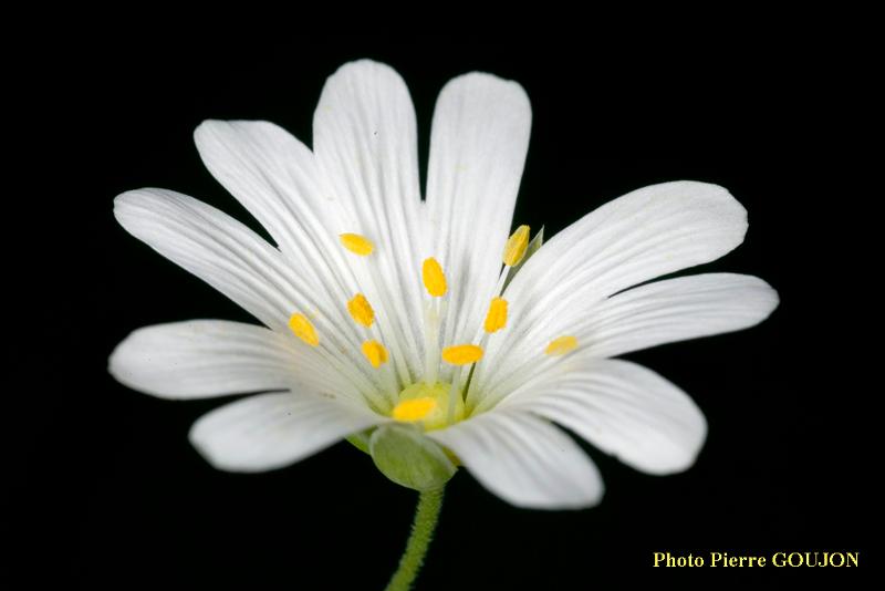 Partie florale de la plante recherchée (4)