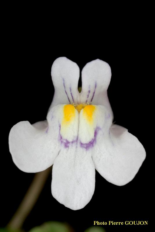 Partie florale de la plante recherchée (5)