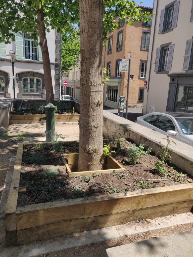 Vue d'un carré de culture réalisé autour d'un arbre